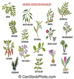 Best natural herbs for pain relief. Hand drawn vector set of...