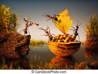 team of ants moor bark with cargo of nuts, teamwork - team...