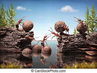 team of ants work constructing dam, teamwork