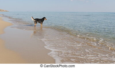 Dog on the beach in slow motion