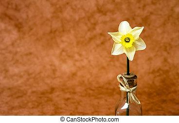 Easter daffodil flower
