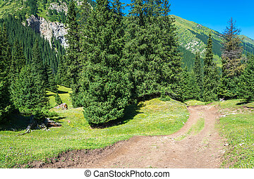 Mountain road among the Tien Shan spruces, Kyrgyzstan.