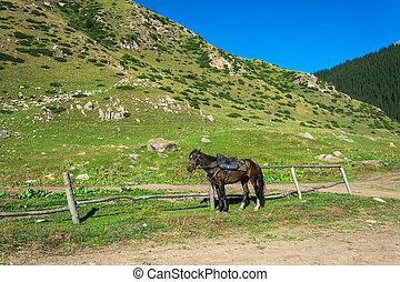 Beautiful mountain landscape with horses in the foreground, Kyrgyzstan.