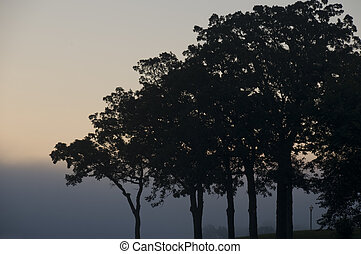 Silhouette of Trees in the Early Morning.