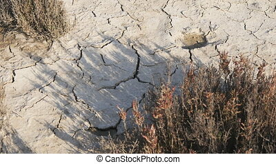 Dehydrated dry soil in the desert. Ecology concept