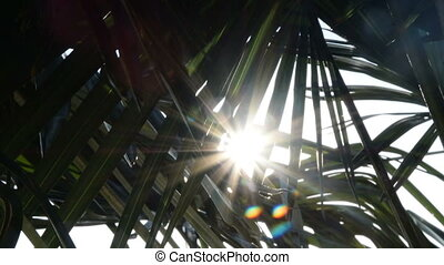 mix of 2 shots Tropical palm frond in sunlight