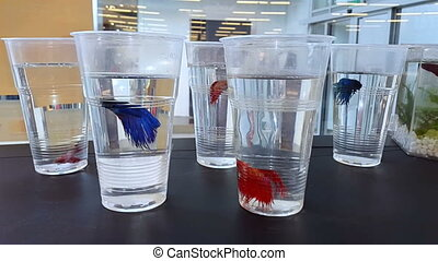 Pet store window display with exotic tropical fish for sale...