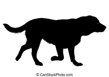 Golden retriever dog - Silhouette of a Golden retriever dog