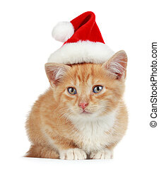 kitten with xmas hat - cute little kitten wearing red...
