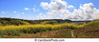 Aliso Viejo Wilderness Park view with yellow wild flowers...