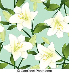 Lilium candidum, the Madonna lily or White Lily on Green...
