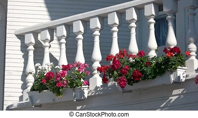 Flowers on the balcony. Petunias of bright red color. Plants...