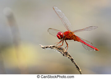 mage of dragonfly perched on a tree branch on nature...