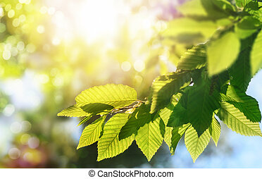 Green leaves on a branch with the sun in the background