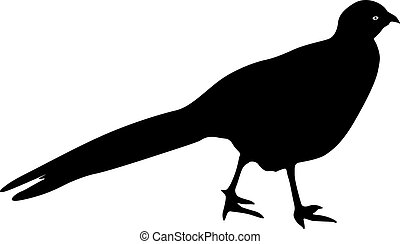 Silhouette bird pheasant on a white background.