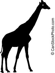Silhouette high African giraffe on a white background