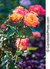 Fresh flower garden on spring time at countryside