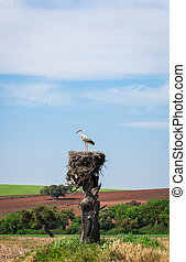 White stork on nest with beatiful countryside as background...