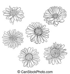 Daisy hand drawn sketches set. Vector llustration.