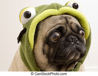 Pug Dressed Up as Turtle