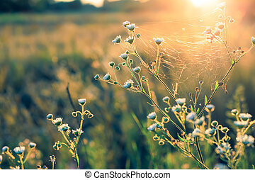Flowers and plants on a background sunset.