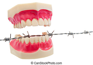 Denture on barbwire. - Cut out of denture on barbwire.