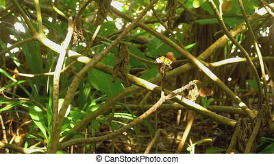 Tropical butterflies - Big butterflies feeding and fly at...