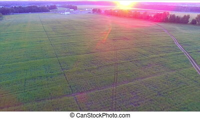 Sunrise over the farm field aerial view