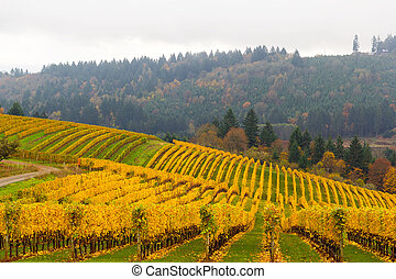 Fall Colors at Vineyard in Dundee Oregon