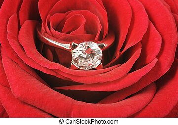 Diamond ring on red rose