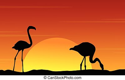 Silhouette of flamingo at sunset beauty landscape