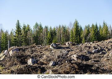 Clear cut forest area - Stony and rocky clear cut area in a...