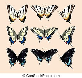 Collection of butterflies - Vector collection of realistic...