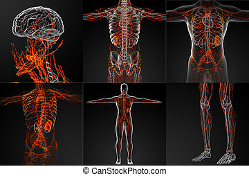 3d rendering of the lymphatic system