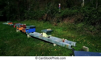Beehives fly around - Honeybees flying in and out of...