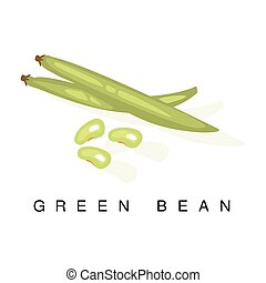 Green Bean Pod , Infographic Illustration With Realistic Pod-Bearing Legumes Plant And Its Name