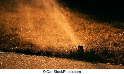 Sunset Back Lit Sprinkler Spraying Water - Sunset back lit...