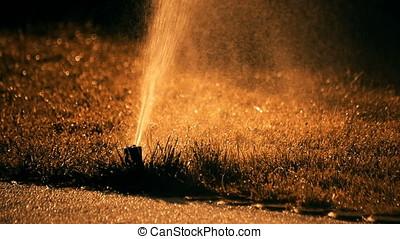 Irrigating Water Spraying Sunset Back Lit Sprinkler - Sunset...