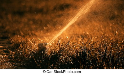 Underground Sunset Back Lit Sprinkler - Sunset back lit...