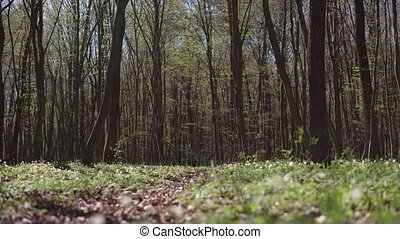 Sunny Day Spring Forest Road - Track view of sunny day...