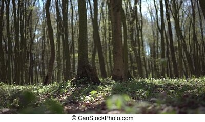 Sunny Day Spring Forest - Track view of sunny day spring...