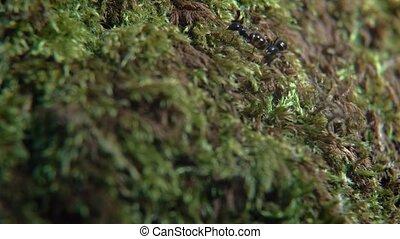 Macro Life of Ants