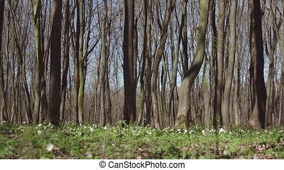 Sunny Day Spring Forest - A sunny day spring tree forest...