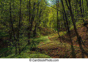 beautiful landscape with green trees in spring forest