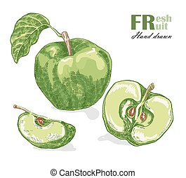 Green apple isolated on white background. Fruit vector illustration sketch