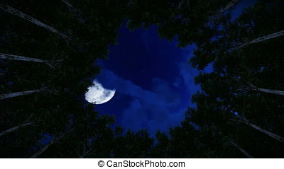 Looking up at a circle of redwood trees, timelapse night to...