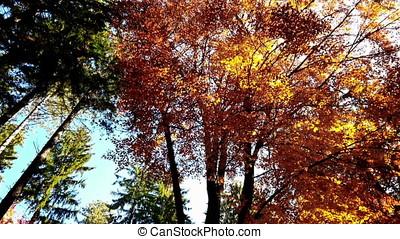 Forest in autumn, tilt