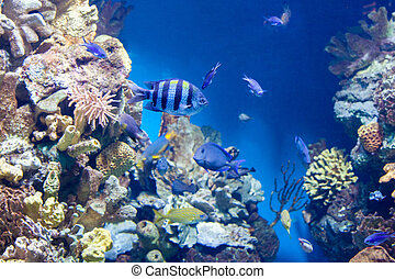 Sergeant major fish and many other fish Sergeant major fish...