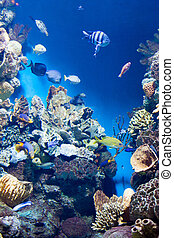 Many various fish on background of a coral reef