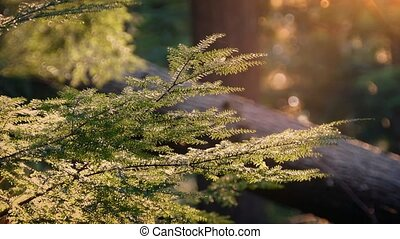 Pollen Blowing Past Branches Lit Up At Sunset - Branches in...